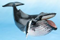 立体図鑑 マリンママルデラックスボックス ザトウクジラ