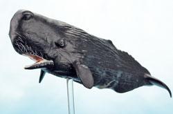 立体図鑑 マリンママルデラックスボックス マッコウクジラ