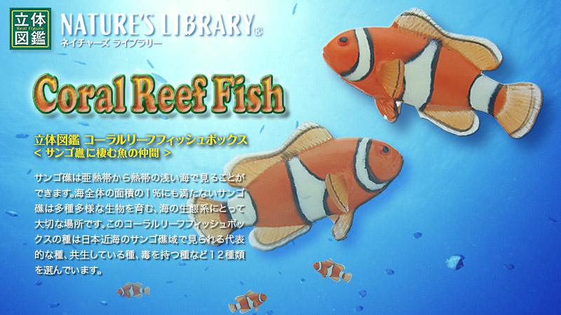 立体図鑑 コーラルリーフフィッシュボックス(サンゴ礁に棲む種類の魚フィギュア、熱帯魚)
