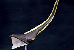 フィギュア フクロウナギ