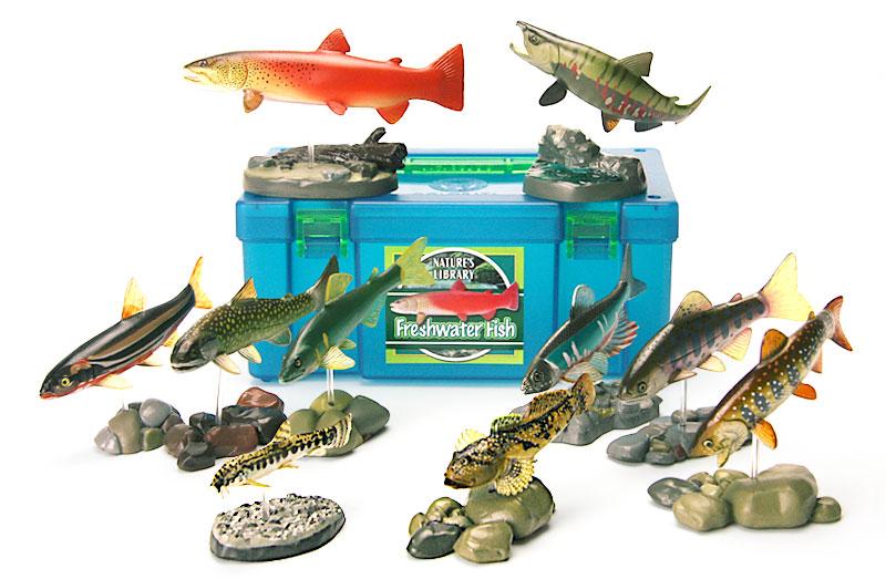 立体図鑑 フレッシュウォーターフィッシュボックス(日本に生息している主な淡水魚)