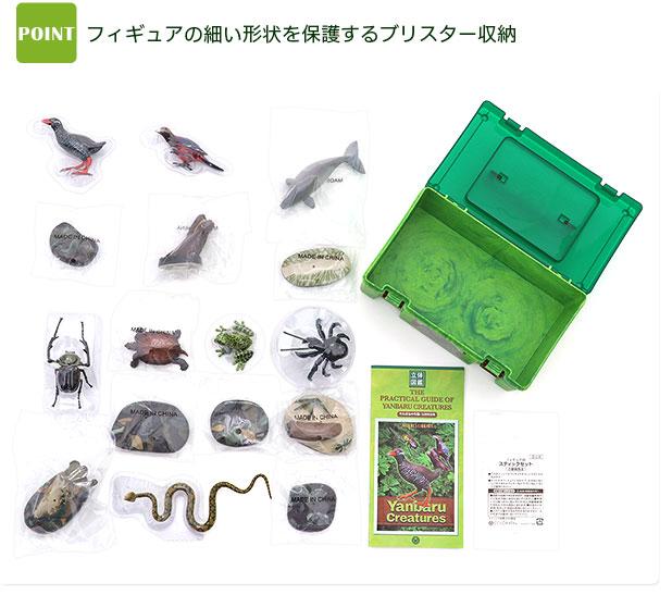 立体図鑑 やんばるの生物ボックス 商品内容