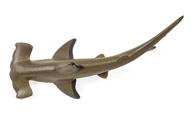 ハンマー型の頭を持つアカシュモクザメ