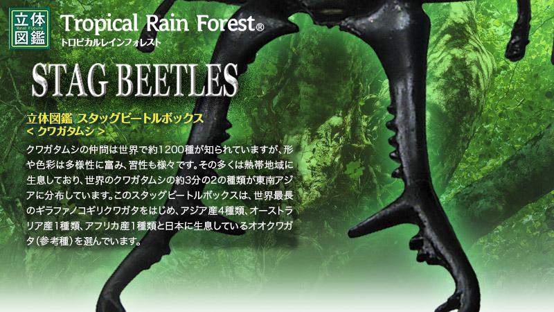 立体図鑑 スタッグビートルボックス(ギラファノコギリクワガタフィギュアをはじめとする世界の熱帯雨林に生息するクワガタムシフィギュア・昆虫)