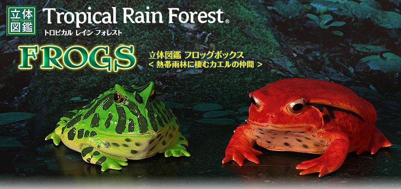 立体図鑑 フロッグ(熱帯雨林に生息するカエル)