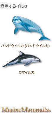 登場するイルカ〜ハンドウイルカ(バンドウイルカ) カマイルカ〜マリンママルズ