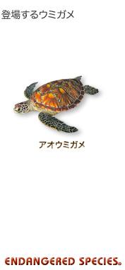 登場するウミガメ〜アオウミガメ〜エンデンジャード スピーシーズ