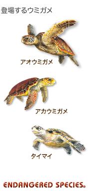 登場するウミガメ〜アカウミガメ アオウミガメ タイマイ〜エンデンジャード スピーシーズ