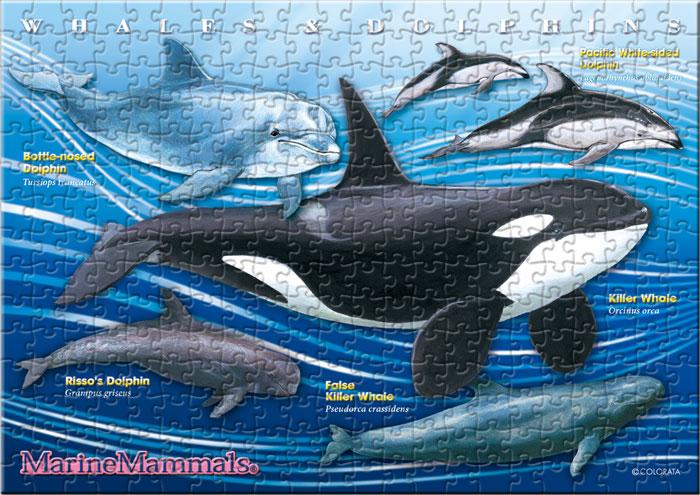 ハクジラの仲間 330ピース B5サイズ ミュージアム ジグソーパズル