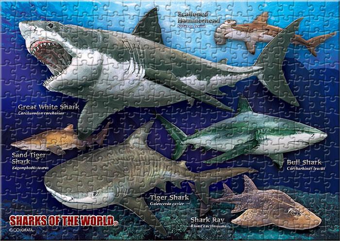 サメの仲間6種 330ピース B5サイズ ミュージアム ジグソーパズル