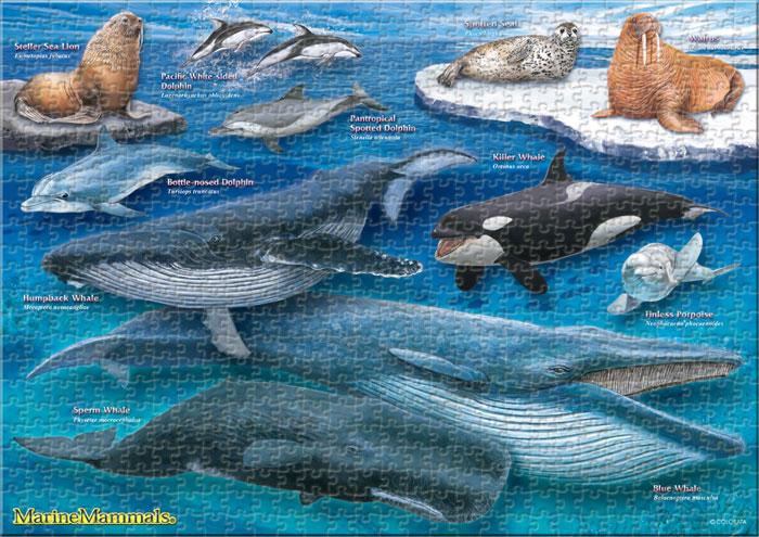 海の哺乳類 720ピース A3サイズ ミュージアム ジグソーパズル