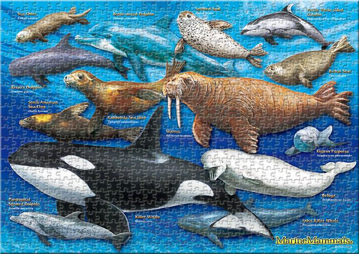 ハクジラ&海獣類 720ピース A3サイズ ミュージアム ジグソーパズル