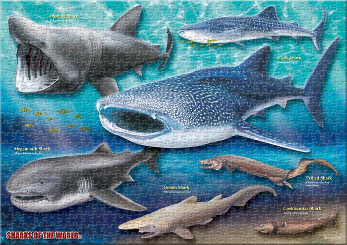巨大ザメ&深海ザメ 720ピース A3サイズ ミュージアム ジグソーパズル