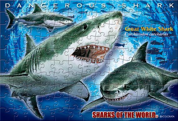 ホホジロザメ/ポストカードサイズ・130ピース リアルジグソーパズル