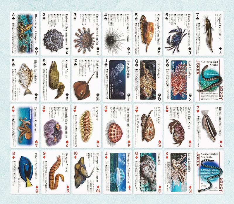 日本近海に生息する28種の海の危険生物、すべてのカードに生物情報を記載しています