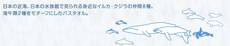 日本の近海、日本の水族館で見られる身近なイルカ・クジラの仲間6種、海牛類2種をモチーフにしたバスタオル