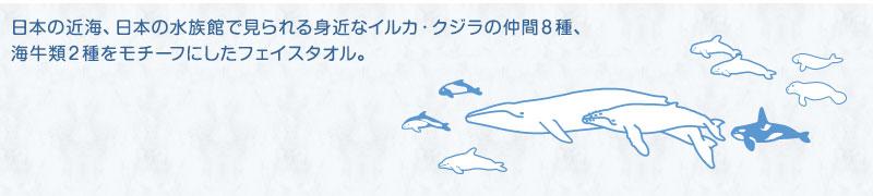 日本の近海、日本の水族館で見られる身近なイルカ・クジラの仲間6種、海牛類2種をモチーフにしたフェイスタオル