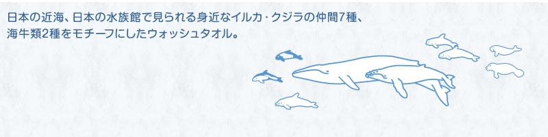 日本の近海、日本の水族館で見られる身近なイルカ・クジラの仲間7種、海牛類2種をモチーフにしたウォッシュタオル