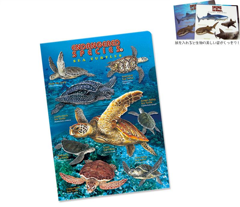 クリアケース ウミガメ