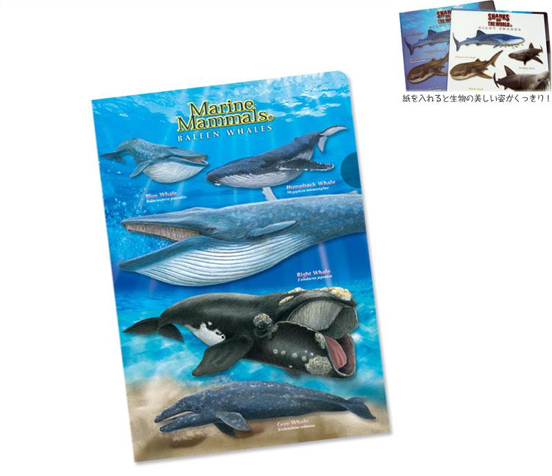 クリアケース ヒゲクジラ