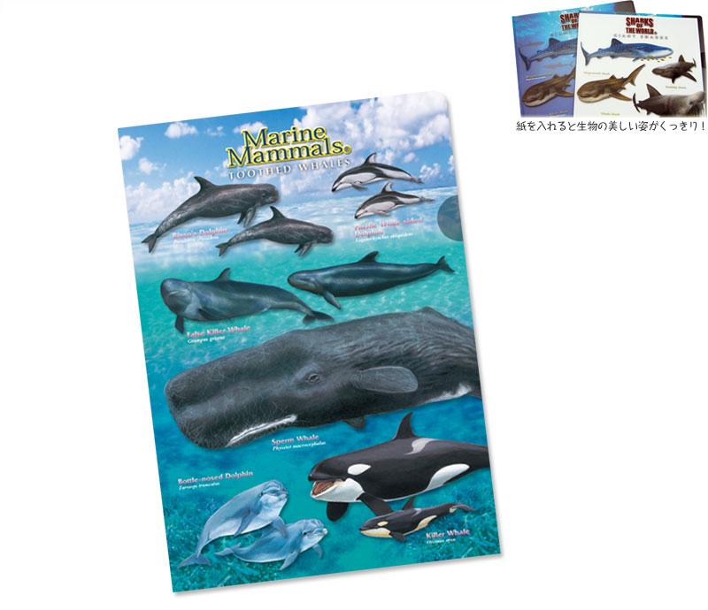 クリアケース ハクジラ