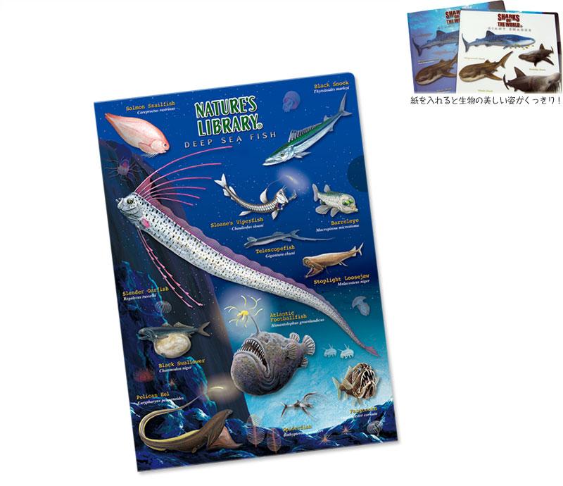 クリアケース 深海魚