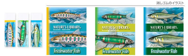 消しゴム3個セット 淡水魚 ヤマメ、オイカワ、アユのイラスト