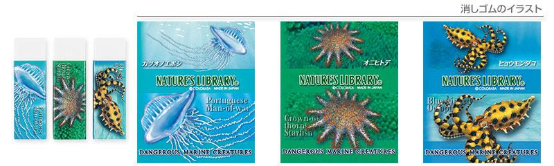 消しゴム3個セット 海の危険生物 カツオノエボシ、オニヒトデ、ヒョウモンダコのイラスト
