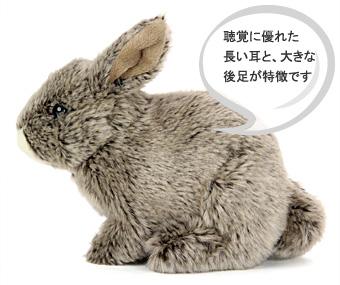 ニホンノウサギは聴覚に優れた長い耳と、大きな後足が特徴です