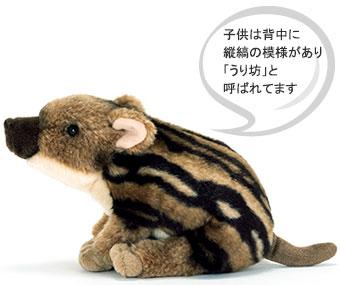 ニホンイノシシは子どもは、背中に縦じまの模様があり、「うり坊」と呼ばれます