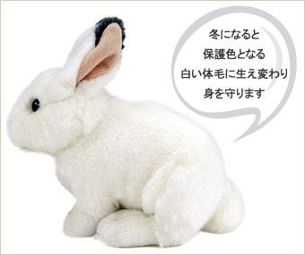 ニホンノウサギは冬になると保護色となる白い体毛に生え変わり、身を守ります