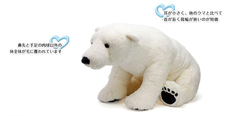 ホッキョクグマ ぬいぐるみ 特徴〜鼻先と手足の肉球以外の体全体が毛に覆われ、耳が小さく、他のクマと比べて首が長く肩幅が狭いのが特徴