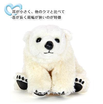 ホッキョクグマ ぬいぐるみ 特徴〜耳が小さく、他のクマと比べて首が長く肩幅が狭いのが特徴
