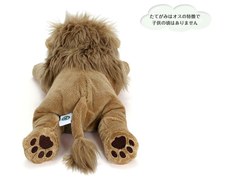 ライオン特徴