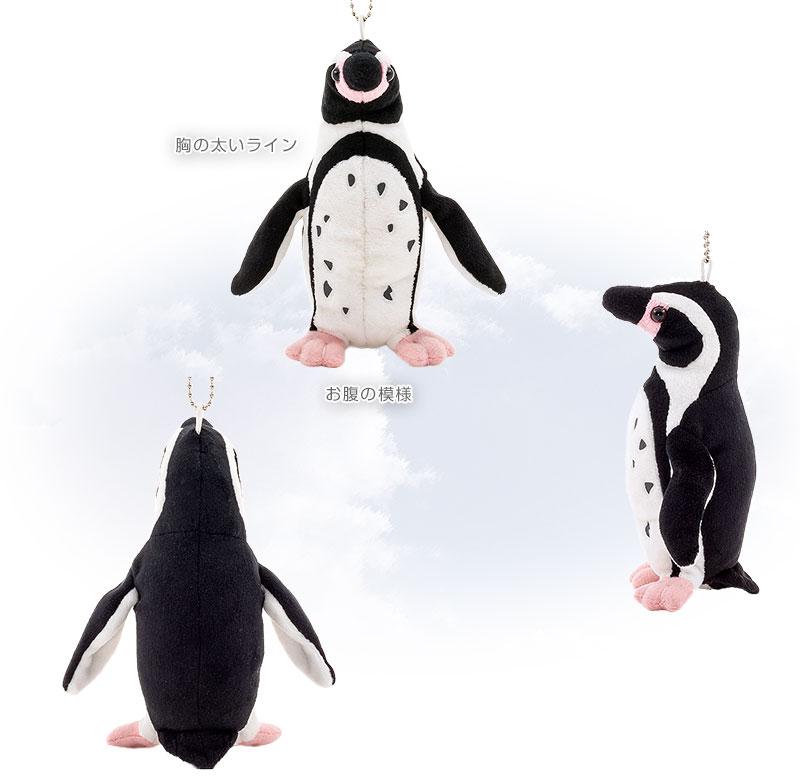 特徴 フンボルトペンギン