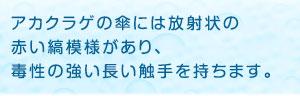 アカクラゲの特徴