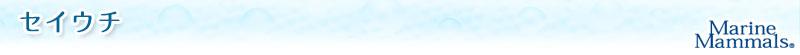 海の生物 ぬいぐるみマスコット セイウチ
