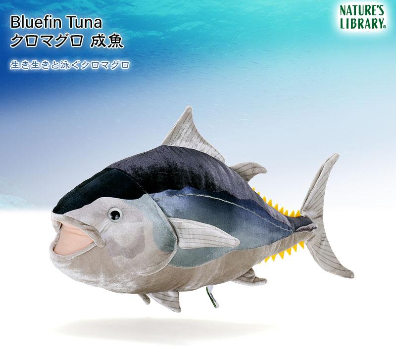 リアル動物 生物ぬいぐるみ クロマグロ 成魚