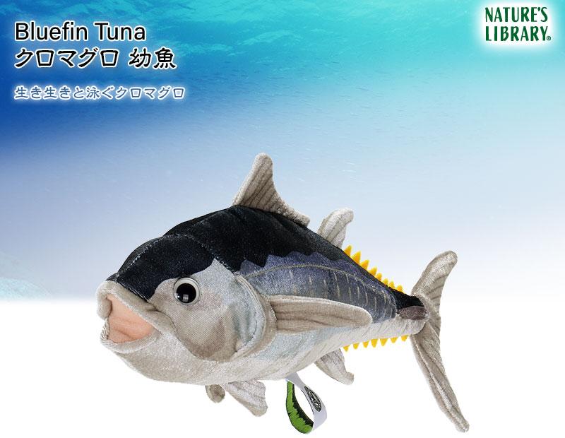 リアル動物 生物ぬいぐるみ クロマグロ 幼魚