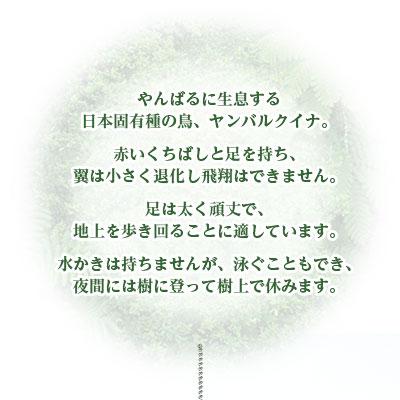 ヤンバルクイナ 特徴