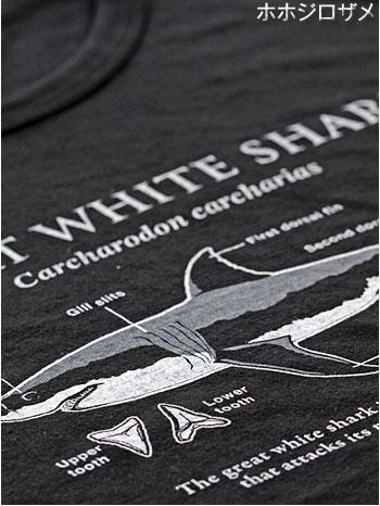 サイエンスデザイン Tシャツ ホホジロザメ ブラック