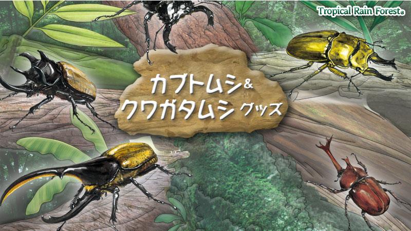 カロラータ人気のカブトムシ・クワガタムシ グッズ〜立体図鑑フィギュアボックス