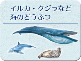 イルカ・クジラなど海のどうぶつ モチーフ