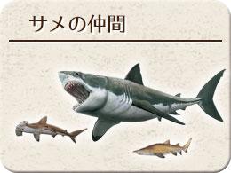 サメのなかま モチーフ