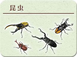 昆虫 モチーフ