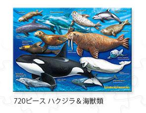 720ピース ハクジラ&海獣類