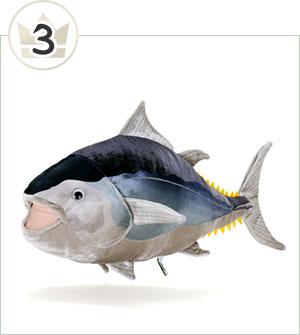 クロマグロ 成魚