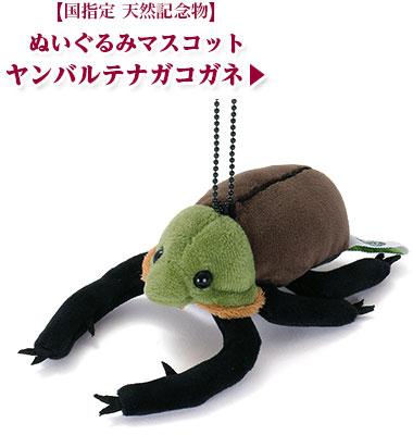 リアル 動物 生物 ぬいぐるみマスコット やんばるの生物 ヤンバルテナガコガネ