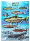 クリアケース A4 淡水魚